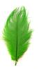 Перо страуса PRK30-35-19 (светло зеленый) Цена за 5 шт
